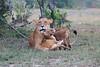 Lion_Family_Morning_Mara_Asilia_Kenya0016