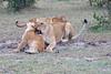 Lion_Family_Morning_Mara_Asilia_Kenya0015
