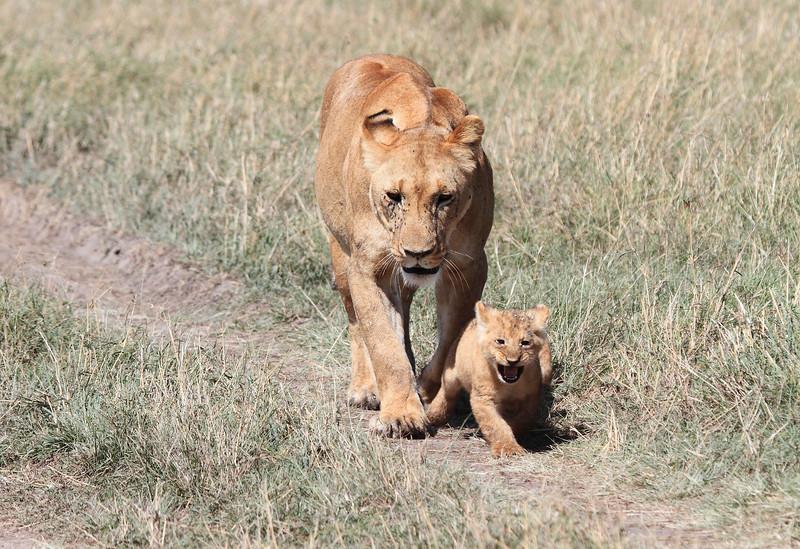 Lion Cubs Mara