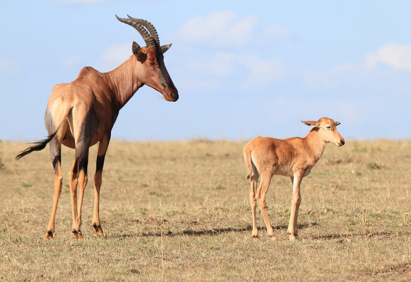 Topi Mom and Young Mara