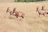 Topi Mara