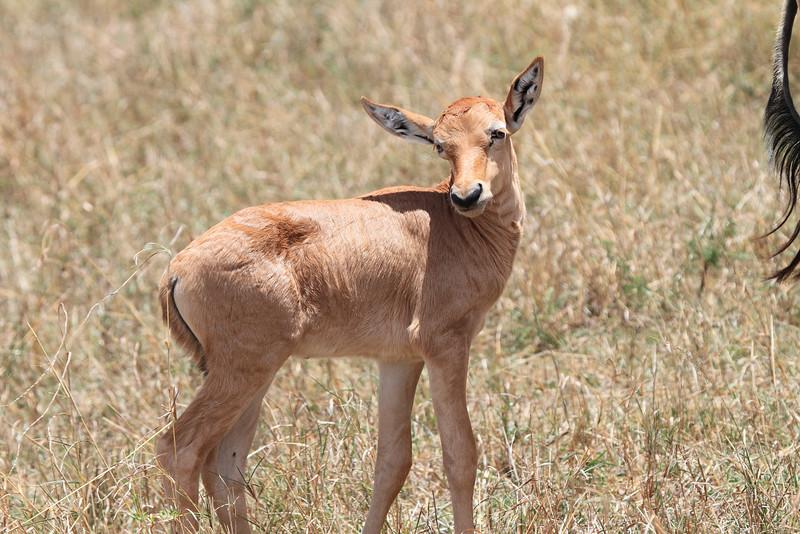 Baby Topi Mara
