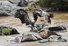 Vulture Duel Kill Mara