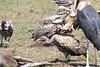 Vulture and Marabou Mara