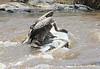 Vulture owner Kill Mara