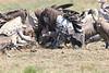 Vultures Mara