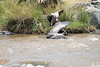 Vulture Swim Mara