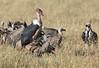 Marabou Stork Mara Kill