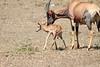 Topi Birth Mara