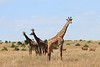 Giraffe Family Mara