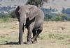 Elephant Family Mud Bath Mara