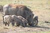 Warthog Mara