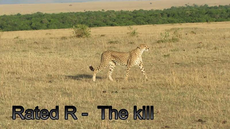 Cheetah Kill Mara Video