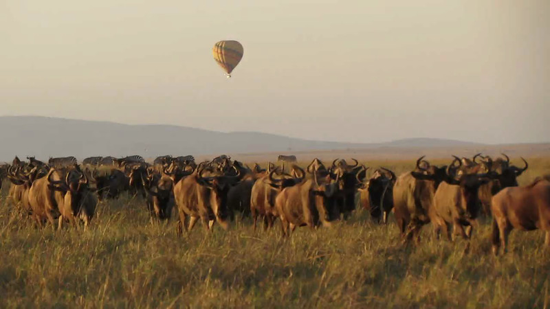 Mara Wildlife Video