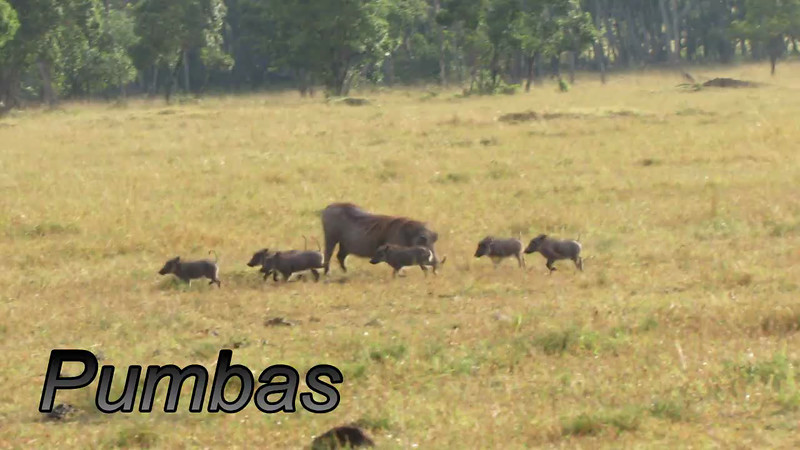 Warthog Pumba Video
