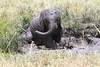 Elephant Family Mud Bath Mara