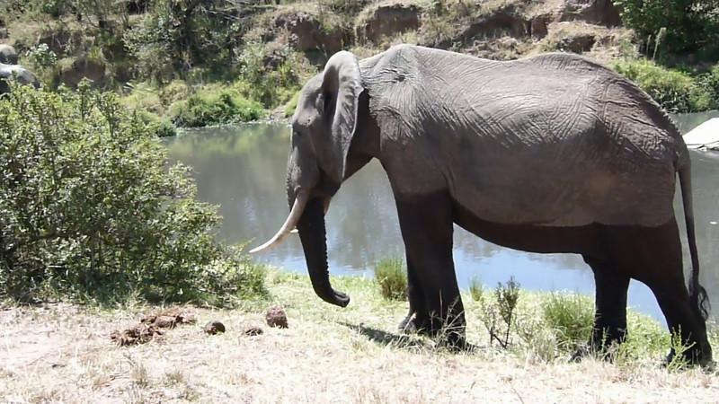 Elephant Mud Bath Mara Video