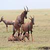 Topi_Mara_Reserve_Asilia_Kenya0012