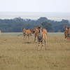 Eland_Mara_Reserve_Asilia_Kenya0004
