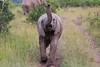 Elephant_Mara_North_Asilia_Kenya0005
