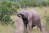 Elephant_Mara_North_Asilia_Kenya0004