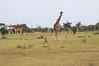 Giraffe_Mara_Reserve_Asilia_Kenya0007