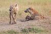 Spotted_Hyena_Mara_Asilia_Kenya0004