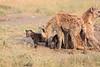 Spotted_Hyena_Mara_Asilia_Kenya0015