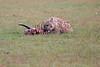 Spotted_Hyena_Mara_Asilia_Kenya0001