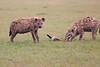 Spotted_Hyena_Mara_Asilia_Kenya0003
