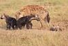 Spotted_Hyena_Mara_Asilia_Kenya0020