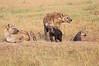 Spotted_Hyena_Mara_Asilia_Kenya0013