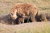 Spotted_Hyena_Mara_Asilia_Kenya0011