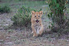 Lion_Family_Morning_Mara_Asilia_Kenya0001