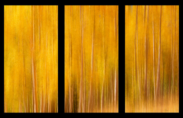 Fine Art Concepts - Three Picture Set, Aspen Glow