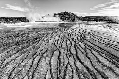 Yellowstone Happenings
