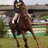 063_horse trials
