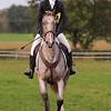 227_horse trials