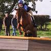 140_horse trials