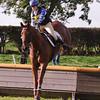 142_horse trials