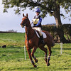 136_horse trials