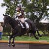 190_horse trials