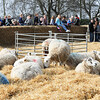 074_Lambing Sunday