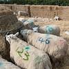 130_Lambing Sunday