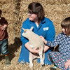 004_Lambing Sunday