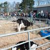 095_Lambing Sunday