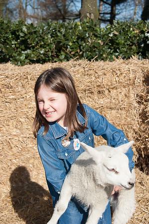 021_Lambing Sunday