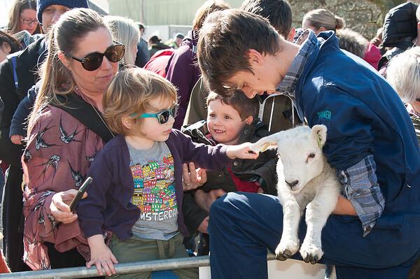 081_Lambing Sunday