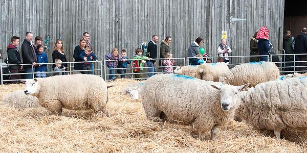 266_Lambing Sunday