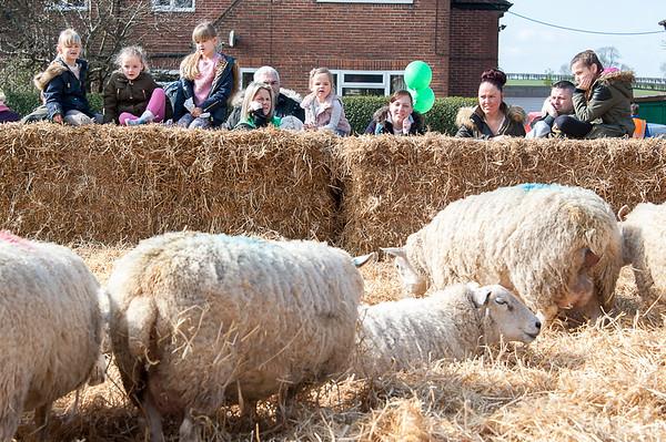 091_Lambing Sunday